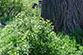 eight Image